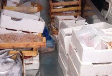 Photo of Palermo, sicurezza alimentare: Sequestrati 150 kg di prodotti ittici