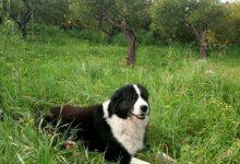 Photo of Lascari: Salviamo Barney perche' appartiene alla cittadinanza Lascarese