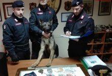 Photo of Palermo: Grazie al fiuto del cane i Carabinieri arrestano un giovane per detenzione di stupefacenti