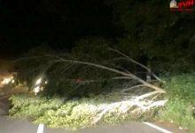 Photo of Termini Imerese: Il forte vento di scirocco causa danni e incidenti
