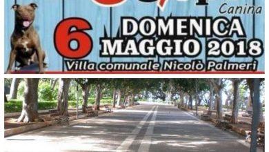Photo of Termini Imerese: Al via Domenica 6 Maggio la VI^ EXPO Canina