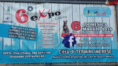 Photo of Termini Imerese: Grande partecipazione per la 6^ edizione della Expò Canina