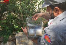Photo of Carabinieri forestali sequestrano oltre 100 cardellini e 4 tartarughe palustri