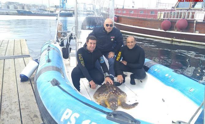 Photo of Palermo: La Polizia avvista e trae in salvo una tartaruga
