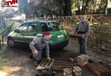 Photo of Blitz al Ballarò: Sequestrati 140 cardellini