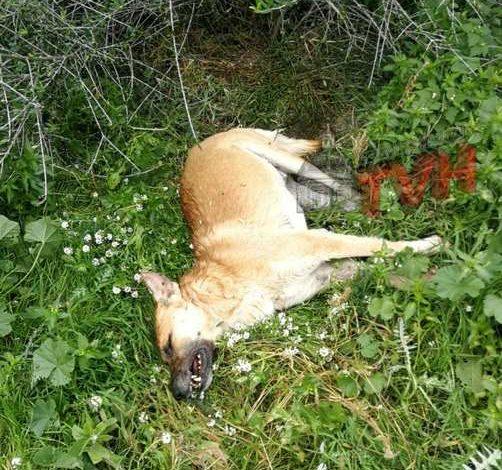 Photo of Termini Imerese: Tre cani ritrovati morti in Contrada Bragone. Erano legati e avvelenati