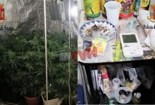 Photo of Palermo: Scoperte e sequestrate due coltivazioni indoor di Marijuana