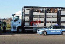 Photo of Palermo: Controlli sul trasporto di animali vivi, multe per 22mila euro