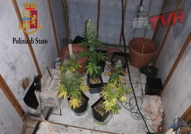 Photo of Palermo: Coltivava piante di marijuana in un garage, arrestato un giovane