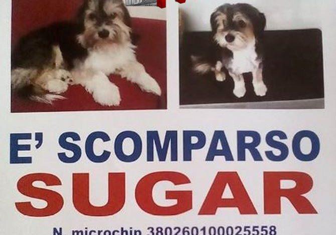Photo of Grotte (Ag): Scomparso un cagnolino, potrebbe essere nella zona del Palermitano
