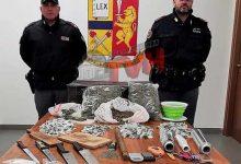 Photo of Palermo: 2 Kg di Marijuana ed un laboratorio della droga scoperti a Brancaccio