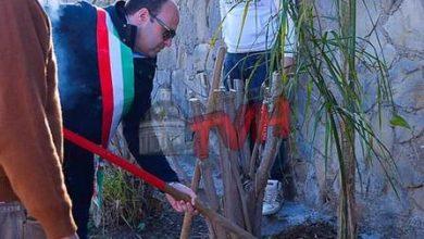 Photo of Trabia: Un albero per ogni nuovo nato