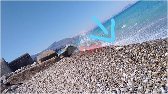 Photo of Termini Imerese: Trovata in riva al mare una Tartaruga morta