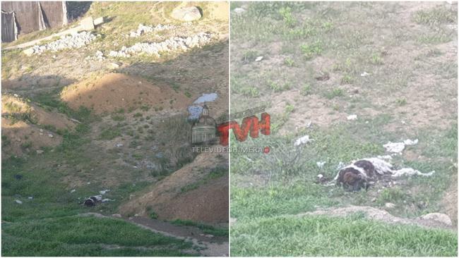 Photo of Termini Imerese: Una capra in avanzato stato di decomposizione rinvenuta in un terreno