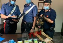 Photo of Palermo: Il Cane Ulisse trova crack, arrestato un 23enne e sequestrati quasi 50000 €