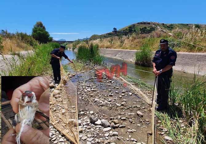 Photo of Termini Imerese: Catturava cardellini lungo il Fiume Imera, arrestato noto uccellatore